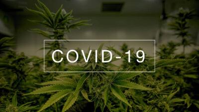 Covid-19 vs Cannabis